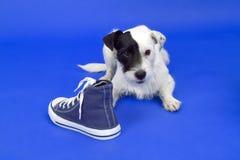 与鞋子的狗 免版税库存照片
