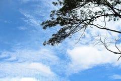 与顶面树的白天天空 库存照片