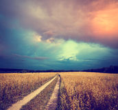 与领域和乡下公路的被定调子的风景 免版税库存照片