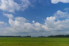 与领域和多云天空的夏日风景 花和道路 库存照片