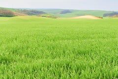 与领域和天空的波浪童话春天风景 一些反弹严格晴朗那里不是的蓝色云彩日由于域重点充分的绿色横向小的移动工厂显示天空是麦子白色风 Moravian托斯卡纳,南摩拉维亚,捷克 图库摄影