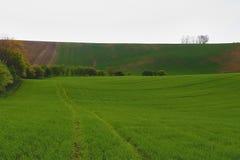 与领域和天空的波浪童话春天风景 一些反弹严格晴朗那里不是的蓝色云彩日由于域重点充分的绿色横向小的移动工厂显示天空是麦子白色风 Moravian托斯卡纳,南摩拉维亚,捷克 库存图片