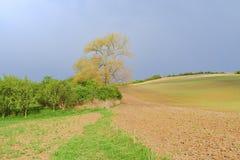 与领域和天空的波浪童话春天风景 一些反弹严格晴朗那里不是的蓝色云彩日由于域重点充分的绿色横向小的移动工厂显示天空是麦子白色风 Moravian托斯卡纳,南摩拉维亚,捷克 免版税库存照片