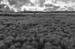 与领域和天空的美好的乡下风景 免版税库存图片