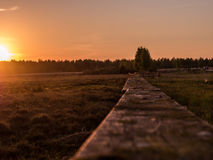 与领域和森林的夏天风景 免版税库存图片