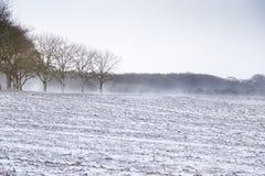 与领域在前景和树的有风冬天场面在背景中 图库摄影