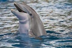 与题头的海豚在水之上 免版税库存照片