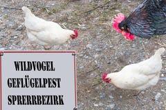 与题字野生鸟的被取缔的标志-禽流感锁 库存图片