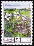 与题字`岑属细刨花`的共同的灰,从系列`保护了树和灌木`,大约1980年 免版税库存照片