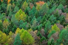 与颜色树的木头 雨天在有雾的森林里 黄色结构树 秋天森林,在小山,橙色橡木,加拿大桦的许多树, 库存图片