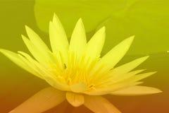 与颜色阴影的花背景 免版税库存图片