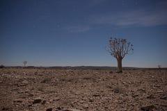 与颤抖树的普通沙漠场面在午夜 图库摄影