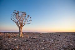 与颤抖树的普通沙漠场面在日出 图库摄影