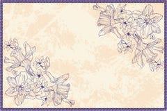 与风信花和水仙花的葡萄酒框架 免版税库存照片
