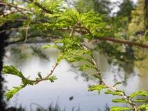 与风景的湖场面 免版税库存照片