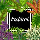 与风格化植物和叶子的热带天堂卡片 给的小册子,横幅, flayers做广告图象 免版税库存图片