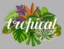 与风格化热带植物和叶子的背景 给的小册子,横幅, flayers,卡片,纺织品做广告图象 免版税库存照片