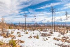 与风灾难的影响的森林的风景 免版税图库摄影