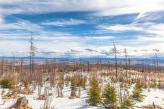 与风灾难的影响的森林的风景 免版税库存照片