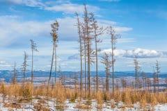 与风灾难的影响的森林的风景 免版税库存图片