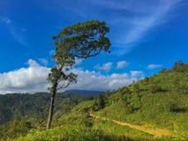 与风的大高大的树木弯在平安走的远足旁边 免版税库存图片