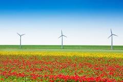与风车和天空的美好的郁金香领域 免版税库存照片