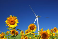 与风车的向日葵领域 库存照片