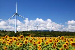 与风车的向日葵领域 免版税图库摄影