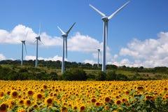 与风车的向日葵领域 免版税库存图片