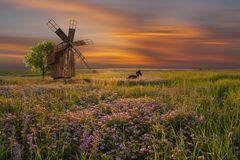 与风车的风景在花卉草甸 库存照片