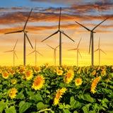 与风轮机的向日葵领域 免版税库存照片