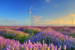 与风轮机的淡紫色领域,保加利亚 库存照片