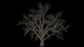 与风阿尔法通道的增长的树 库存例证