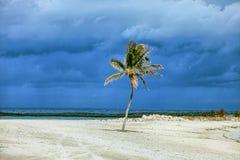 与风雨如磐的云彩的被日光照射了棕榈树在背景中 巴哈马海岛天堂 免版税库存图片
