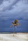 与风雨如磐的云彩的被日光照射了棕榈树在背景中 巴哈马海岛天堂 免版税库存照片