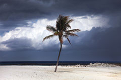 与风雨如磐的云彩的被日光照射了棕榈树在背景中 巴哈马海岛天堂 库存图片