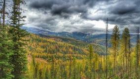 与风雨如磐的天空的秋天Tamaracks 库存图片
