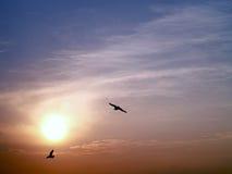 与飞回家的两只鸟剪影的日落  免版税库存图片