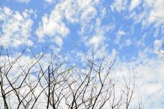 与飞机的树枝 库存图片