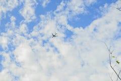 与飞机的树枝 免版税库存图片