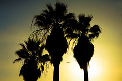 与飞机的棕榈树在日落 库存照片