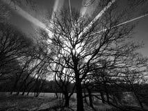 与飞机转换轨迹的树在黑白照片 免版税库存照片