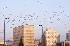 与飞行在前面的许多鸟的后共产主义水泥公寓 图库摄影