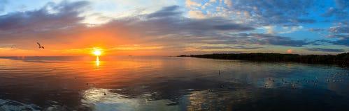 与飞行在日落的海鸥的全景平静的场面多云海日落 免版税库存照片