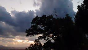 与飞行在树的鸟的剧烈的风景反对日落 股票视频