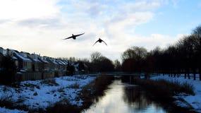 与飞行在运河的迁徙鸟的冬天风景 库存图片