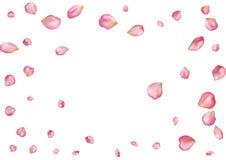 与飞行桃红色玫瑰花瓣的抽象背景 免版税图库摄影