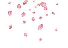 与飞行桃红色玫瑰花瓣的抽象背景 图库摄影