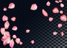 与飞行桃红色玫瑰花瓣的抽象背景 免版税库存照片