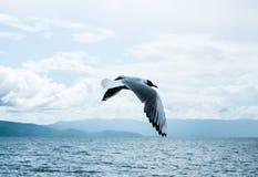 与飞行海鸥的海洋风景在风雨如磐的海 库存图片